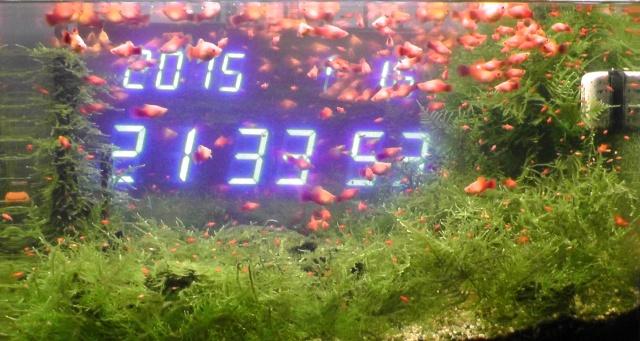 熱帯魚 水槽 プラティ デジタル時計  ウィローモス