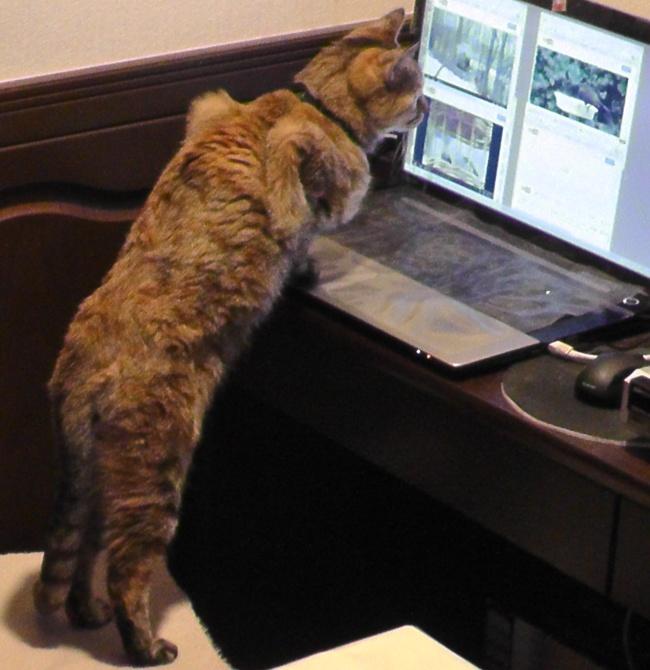 猫が喜ぶ動画