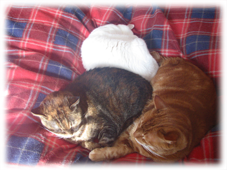 冬恒例、猫団子140128