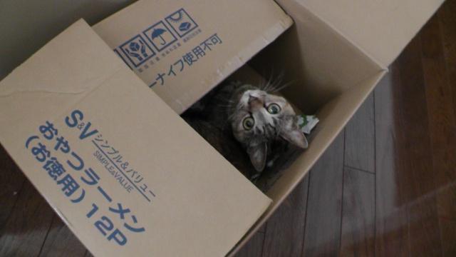 箱の中にいる猫 ねこ ネコ
