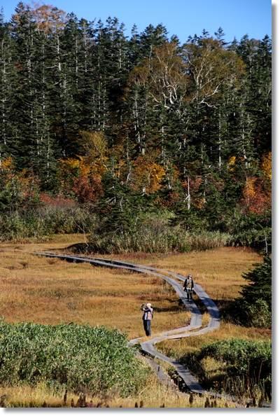 栂池自然園-39 15.10.2