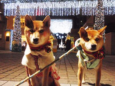 20121214歩いて代官山から渋谷に行きました2