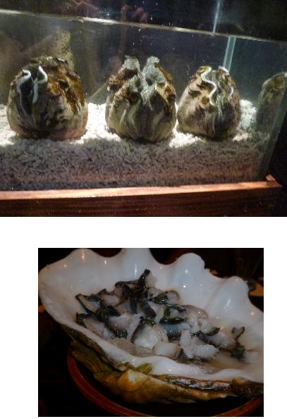 シャコ貝1,2.png