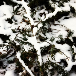 snow__.JPG
