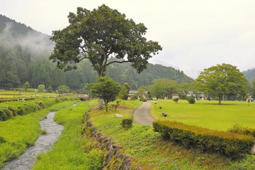 6大木と小川.jpg