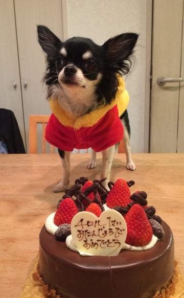 チロル一歳のお誕生日