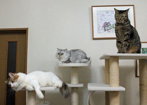 タワー猫1.jpg