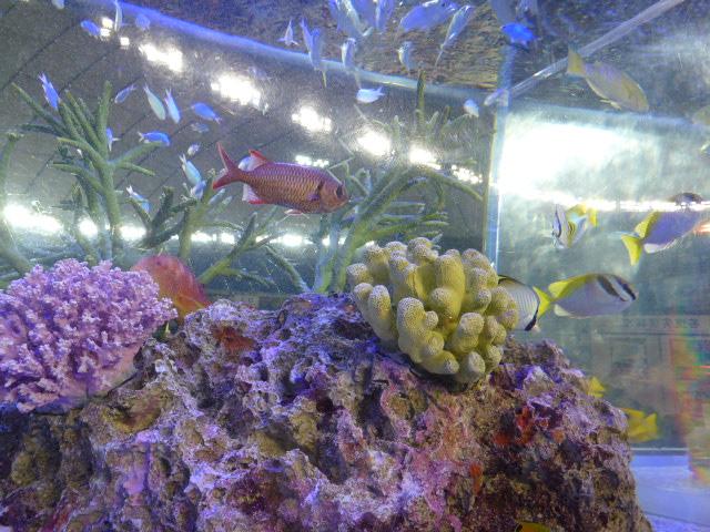 6 水族館