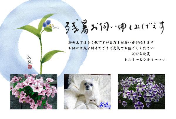 2015残暑お見舞い_シルちゃんママさん