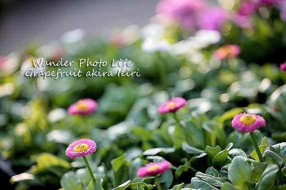 IMG_0987のコピー.jpg