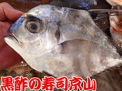 寿司 出前 江東区 東陽