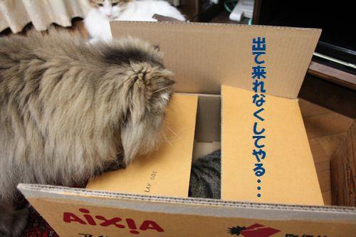 段ボール猫4.jpg