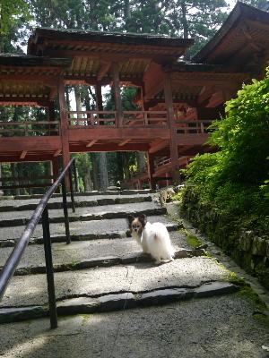 2012京都夏2−32.JPG