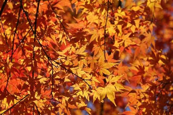 神山森林公園の紅葉-2♪