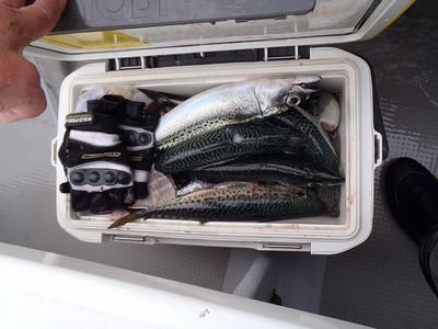 20130519 サバ大漁
