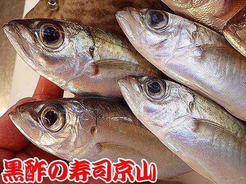 寿司 出前 葛飾区 新小岩.jpg
