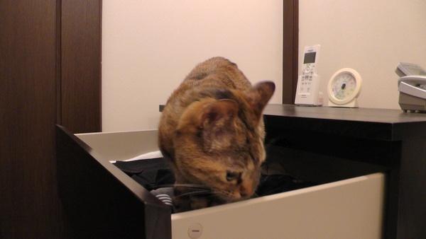IKEA MALM 開いた引き出しに乗る猫