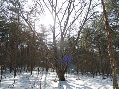 シンボルの癒しの気になる木