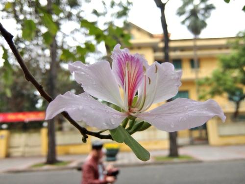 ハノイ ホーチミン廟 ベトナム 観光 大統領官邸