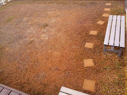 クラピアの雪がとけたら気になる雑草1