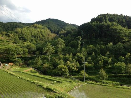 1水田風景5500.jpg