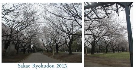 お花見20133.jpg