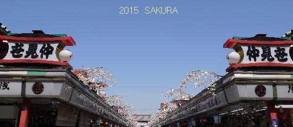 2015sakura9