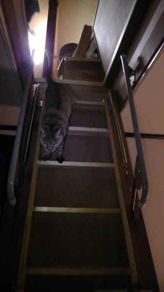 小屋裏収納の折りたたみ階段と猫