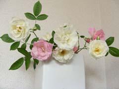ブログ白とピンクのバラ.jpg