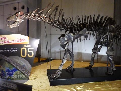 恐竜展2017巨大化の謎にせまる25 アマルガサウルスの全身骨格
