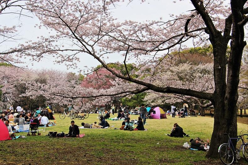 5.桜の広場.JPG