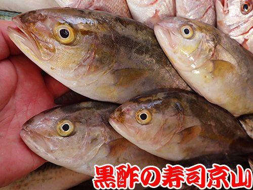 寿司 出前 新鮮 港区 南麻布