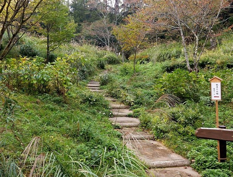 秋草の小径1.JPG