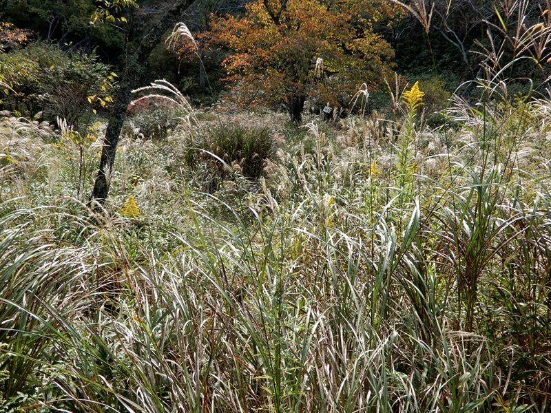 秋草の小径