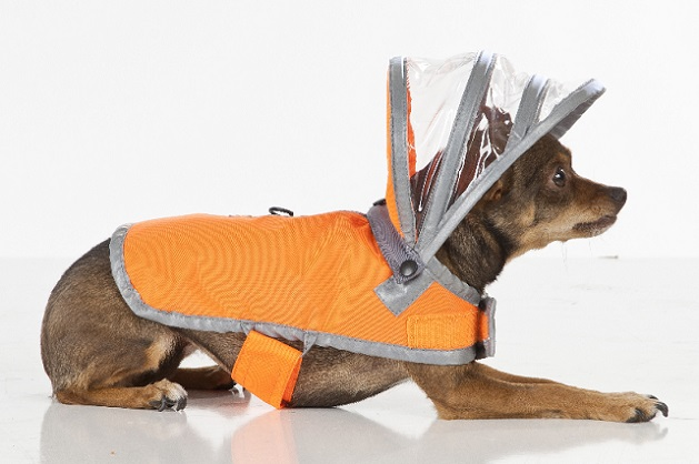 犬 宇宙服