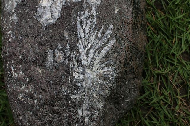 多摩菊花石