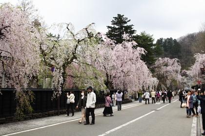 角館武家屋敷としだれ桜