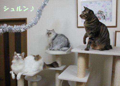 タワー猫2.jpg