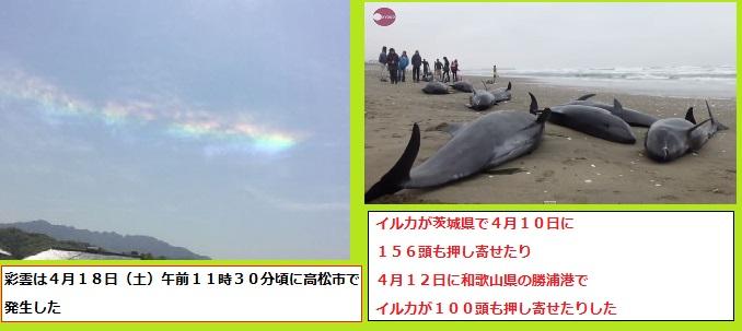 150420彩雲イルカ