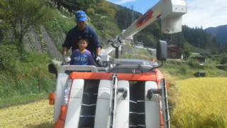 稲刈り2012b