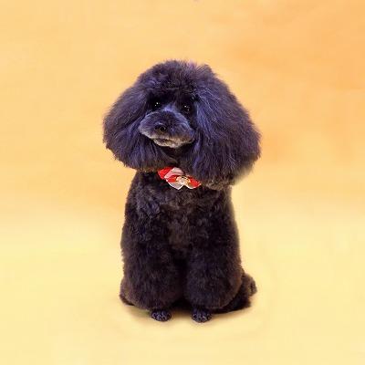 太田カノン(黒)6歳.jpg
