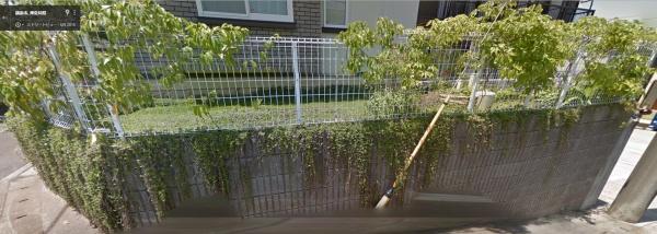 フェンスに絡ませたムベが生い茂っている