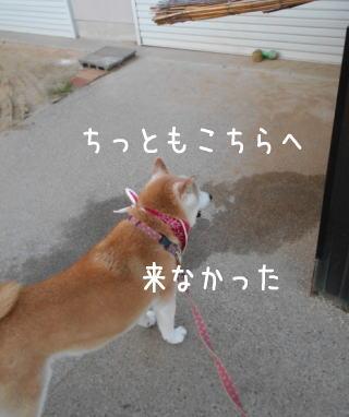 0713トムちゃん5.jpg
