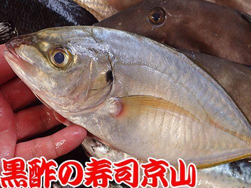 寿司 出前 文京区 千駄木