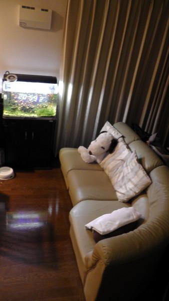 水槽とソファ