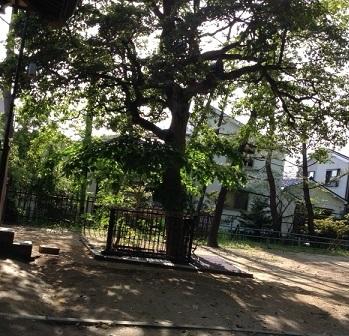 大津神社の木