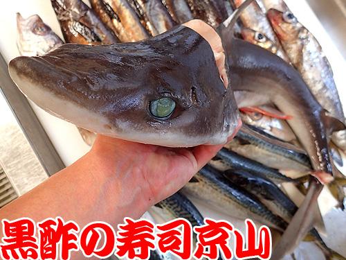 深海魚 寿司 渋谷区恵比寿.jpg