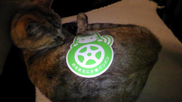 猫に「のるまえに #猫バンバン」ステッカーを貼る