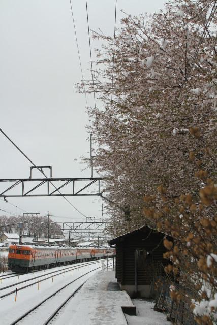 しなの鉄道  桜 .雪 .霧 .169系 国鉄 湘南急行色 6連