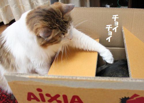 段ボール猫3.jpg
